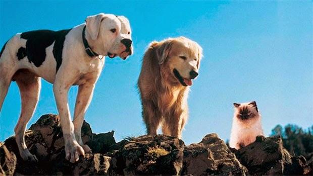 Top 5 Filmes com Cachorros – A Incrivel Jornada